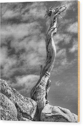 Still Standing Wood Print