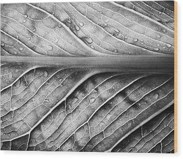 Streamlined Wood Print