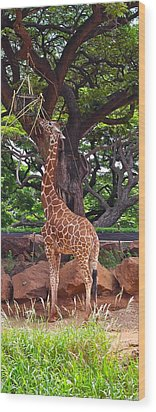 Stretching It Wood Print by Michele Myers