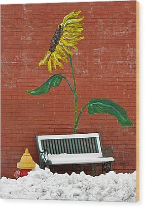Sunflower And Snow Wood Print by Chris Berry