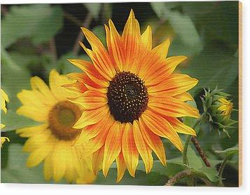 Sunflowers Wood Print by Dennis Bucklin