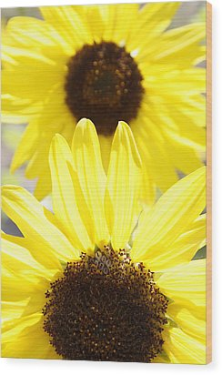 Sunflowers Wood Print by Les Cunliffe