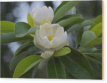Swamp Magnolia Wood Print