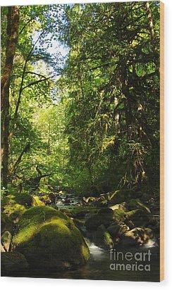 Sweet Day Wood Print by Tim Rice
