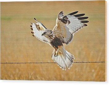 Taking Flight Wood Print by Greg Norrell