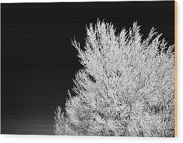 thick hoar frost on bare tree branches against deep blue sky during winter Forget Saskatchewan Canad Wood Print by Joe Fox
