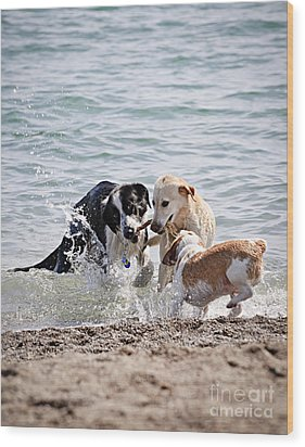 Three Dogs Playing On Beach Wood Print by Elena Elisseeva