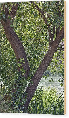 Wood Print featuring the photograph Tree At Stow Lake by Kate Brown