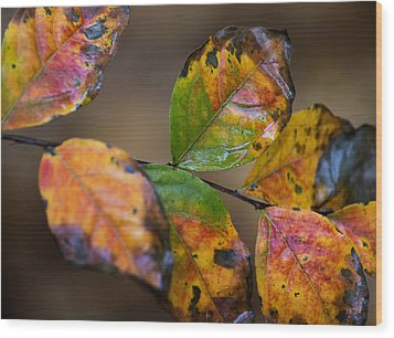 Wood Print featuring the photograph Turning Leaves by Stephen Anderson