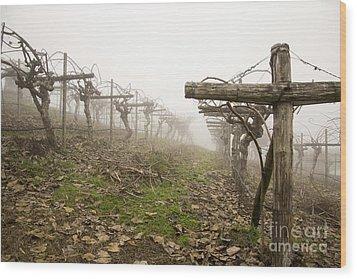 Vineyard In The Fog Wood Print