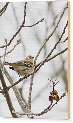 Wood Print featuring the photograph Warbler Calls by Annette Hugen