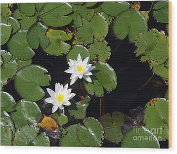 Wood Print featuring the photograph 2 Water Lily by Robert Nickologianis