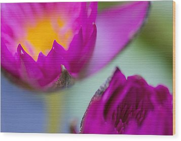 Waterlily Dream Wood Print