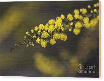 Wattle Flowers Wood Print by Joy Watson