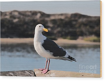 Western Gull At Moss Landing Inlet Wood Print by Susan Wiedmann