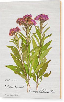 Western Ironweed Wood Print