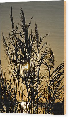 Wood Print featuring the photograph Whalehead Sunset Obx #3 by Greg Reed