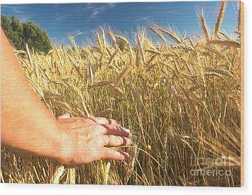 Wheat Field Wood Print by Michal Bednarek
