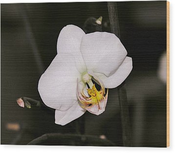 Wood Print featuring the photograph White Orchid by Sherman Perry