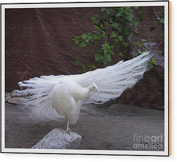 Wood Print featuring the photograph White Peacock by Mariarosa Rockefeller