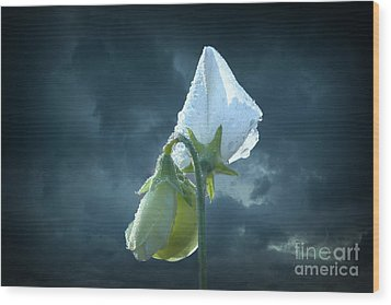 Wood Print featuring the photograph White Sweet Pea  by Marjorie Imbeau