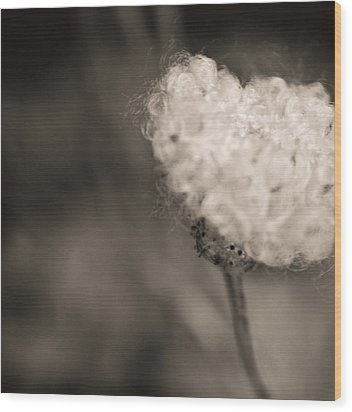 Wood Print featuring the photograph White Whisper by Sara Frank