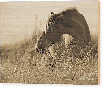Wild Horse On The Beach Wood Print