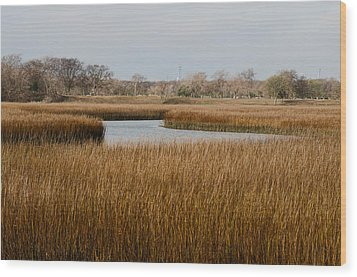 Winter Marsh Wood Print