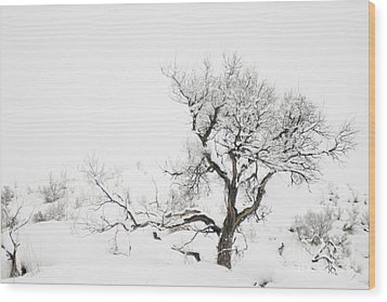 Wood Print featuring the photograph Winter Sage by Sandi Mikuse
