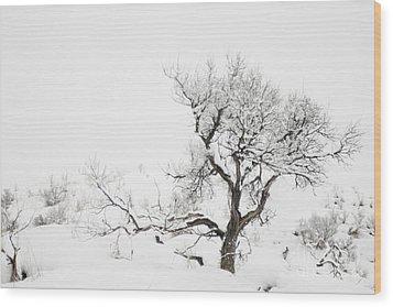 Winter Sage Wood Print by Sandi Mikuse
