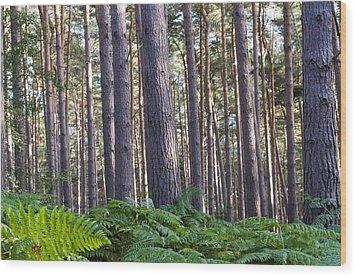 Woods Wood Print by David Isaacson