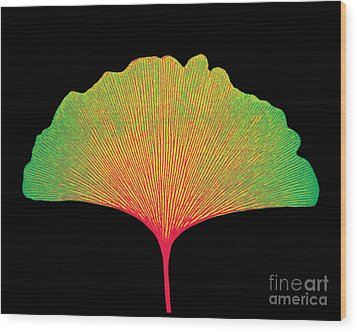 X-ray Of Ginkgo Leaf Wood Print by Bert Myers