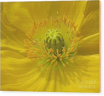 Yellow Macro Wood Print by Chris Anderson