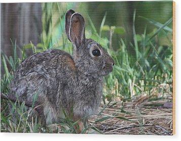 2010 Rabbit Wood Print