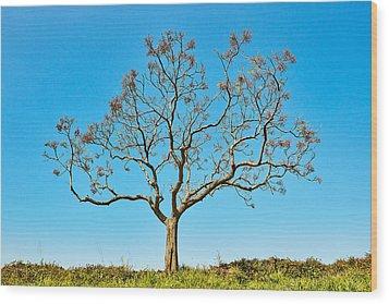 20150217115901fla24142c1p Wood Print