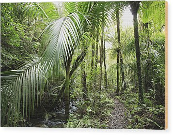 Jungle Wood Print by Les Cunliffe