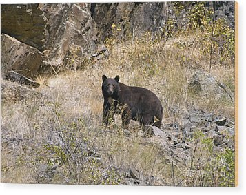 231p Black Bear Wood Print by NightVisions