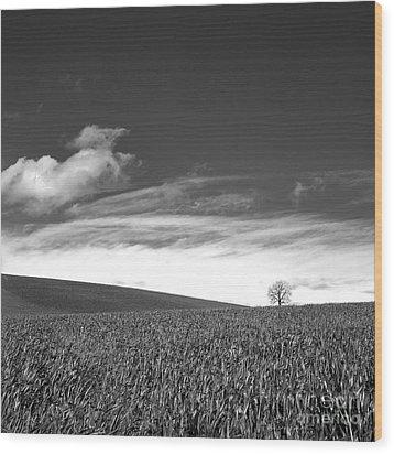 Agricultural Landscape Wood Print by Bernard Jaubert