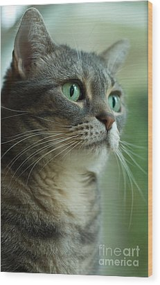 American Shorthair Cat Profile Wood Print by Amy Cicconi
