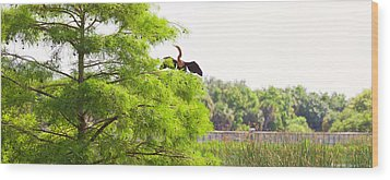 Anhinga Anhinga Anhinga On A Tree Wood Print by Panoramic Images