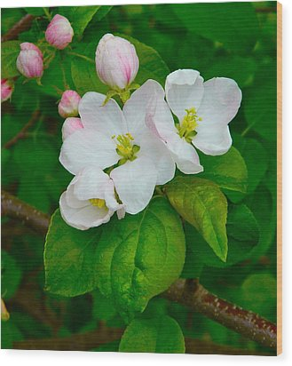 Wood Print featuring the photograph Apple Blossoms by Johanna Bruwer