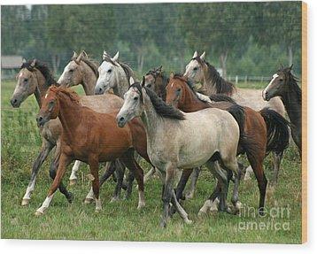 Arabian Horses Wood Print by Angel  Tarantella