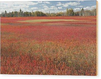 Autumn Blueberry Field Maine Wood Print by Scott Leslie