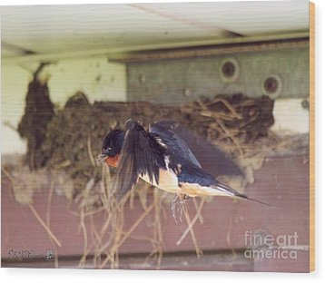 Barn Swallows Constructing Their Nest Wood Print by J McCombie