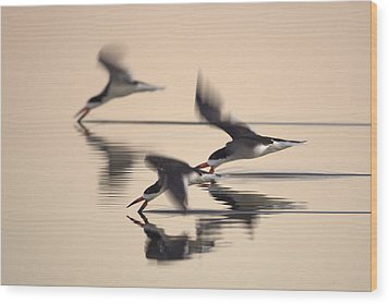 3 Black Skimmers  382z3059 Wood Print by David Orias