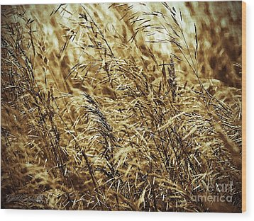 Brome Grass In The Hay Field Wood Print by J McCombie