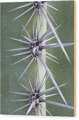 Wood Print featuring the photograph Cactus Thorns by Deb Halloran