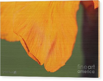 Canna Lily Named Wyoming Wood Print by J McCombie