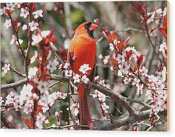 Wood Print featuring the photograph Cardinal by Trina  Ansel