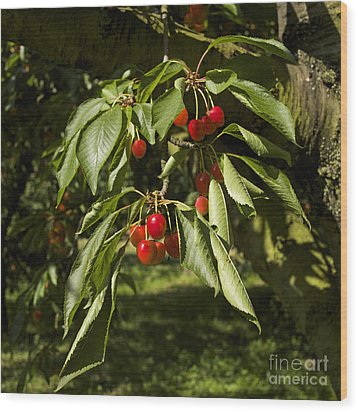 Cherry Tree Wood Print by Bernard Jaubert